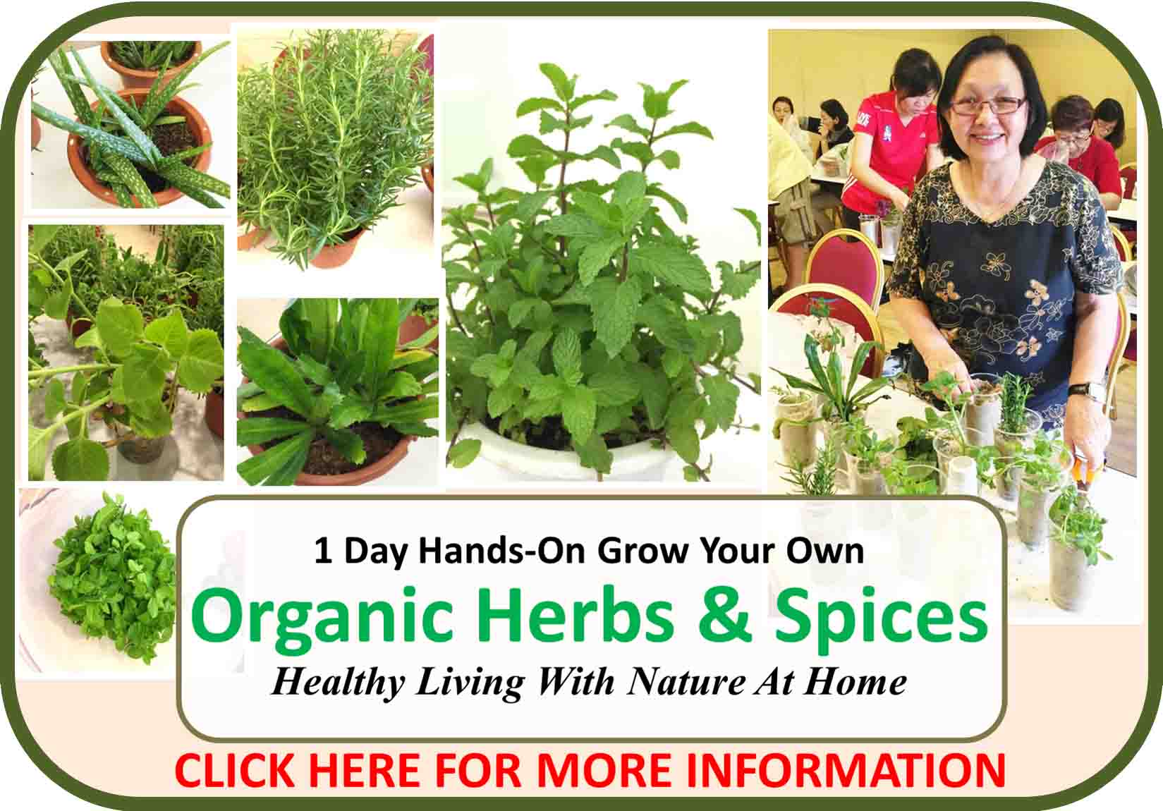1 Day Organic Herbs & Spices