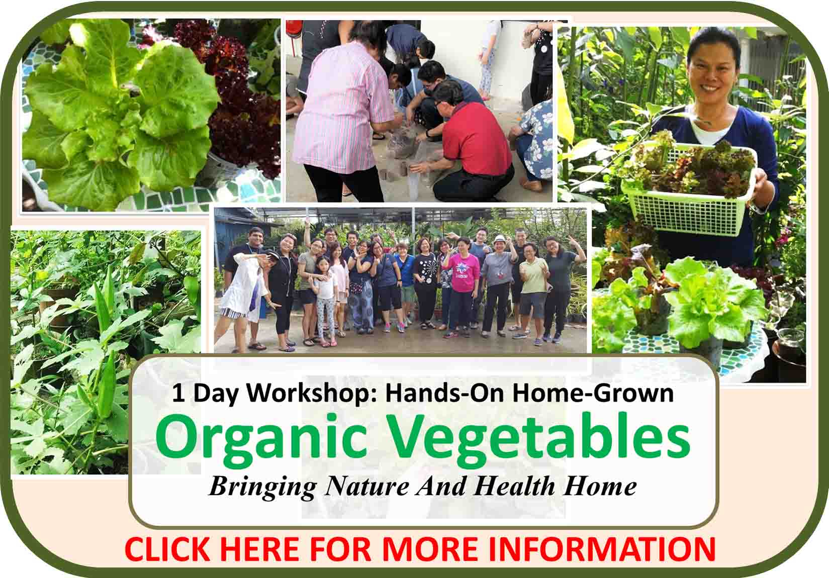 1 Day Hands-On Home-Grown Organic Vegetables