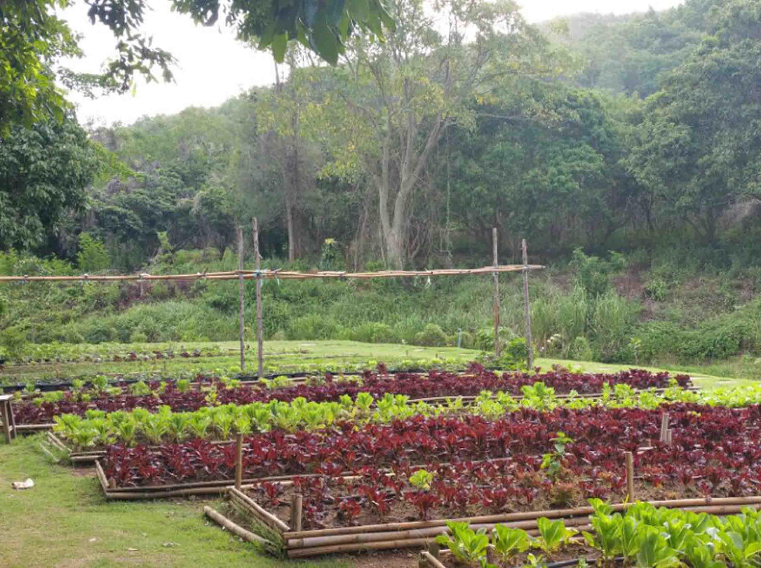 Chiang Mai Farm Stay